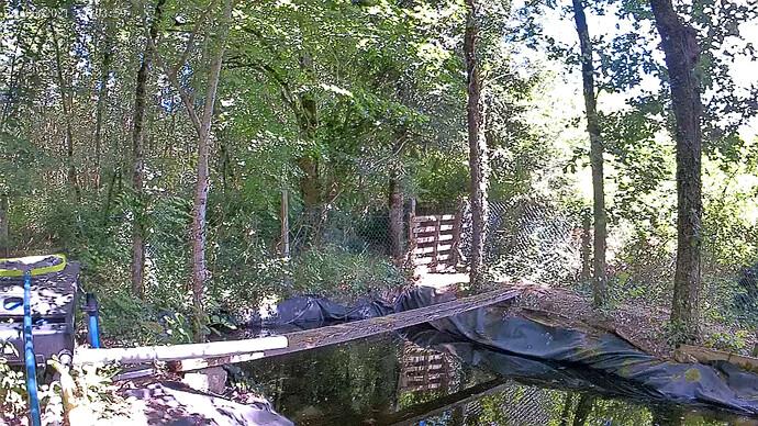 vlcsnap-2021-06-14-23h38m41s317 - Swimming pond